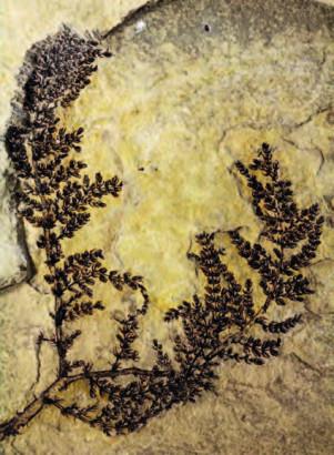 L'origine des plantes à fleurs
