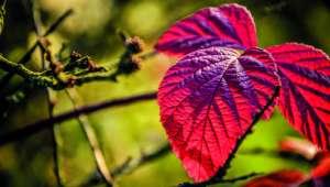 Apprivoiser l'eczéma avec les plantes