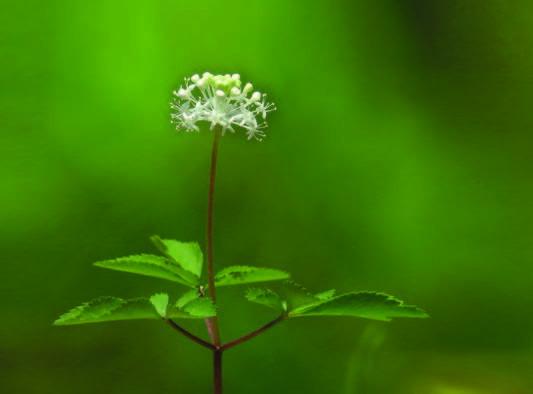 Nouveaux produits : L'Élixir des Vaillants, tisanes de la Vie en Herbes et cocktail Zen Slim Elimination