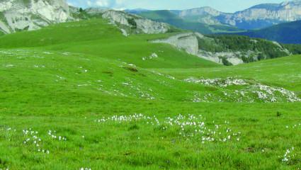 Plateau de Font d'Urle Une lande préalpine, refuge d'une flore rare