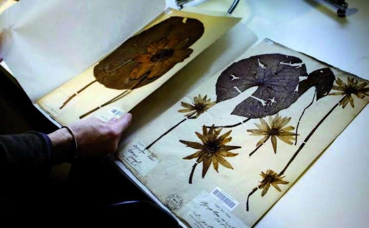 Restauration des planches du Museum national d'histoire naturelle.