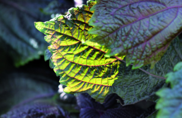 Feuille - nature