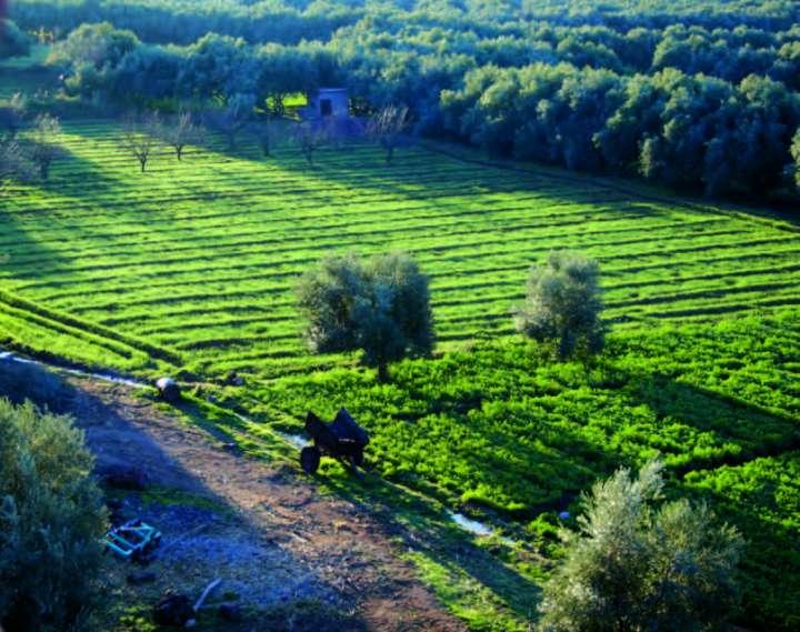 Maroc huiles essentielles
