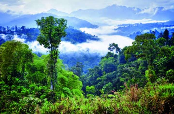 arbres et pluie