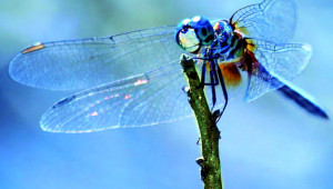 insectes déclin
