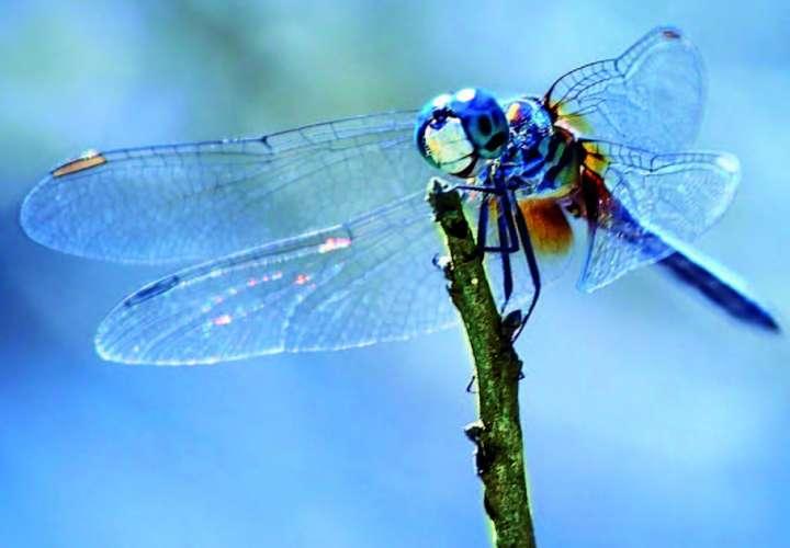 déclin des insectes