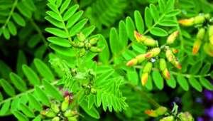 plantes-énergie