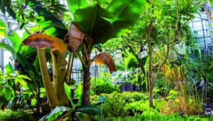 Serres du jardin botanique Jean-Marie Pelt à Nancy