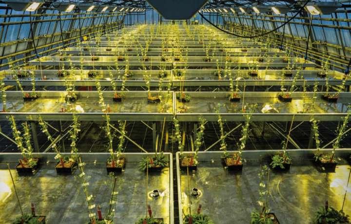 L'Arabidopsis thaliana (arabette des dames), qui sert de modèle aux chercheurs, possède l'un des plus petits génomes végétaux.