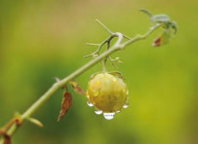 Goutte d'eau sur végétaux