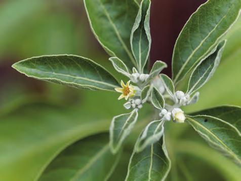 Plusieurs plantes contre les TOC