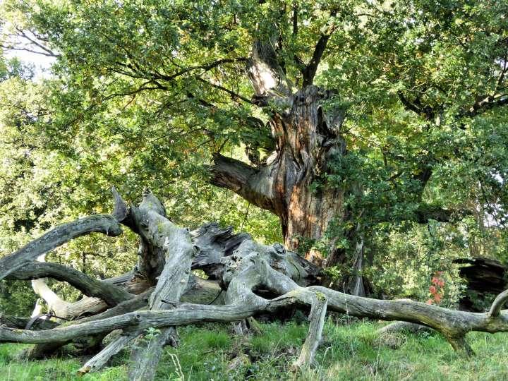 Dépérissement des forêts