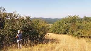 Cueillette des minifruits sur des arbustes locaux