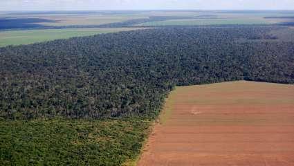 Déforestation liée au à la culture du soja