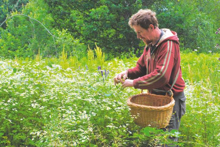 Thierry Thévenin, paysan herboriste