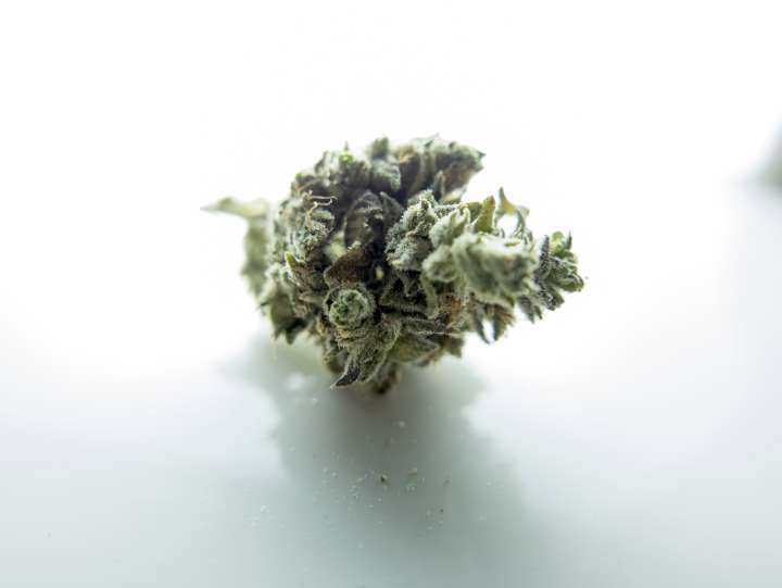 Le cannabis thérapeutique testé contre Parkinson