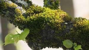 plantes invasives